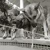 Honorable Mention<br /> Advanced Animal<br /> Kate Hinnant<br /> The Kinkaid School<br /> Houston, TX<br /> Instructor: David Veselka