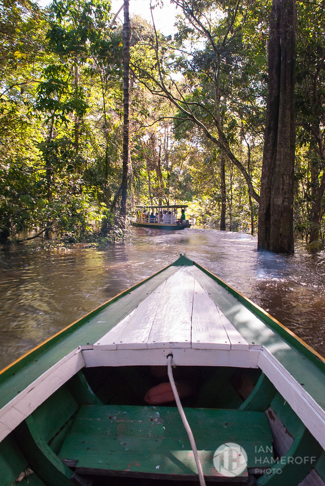 In the Flooded Forest