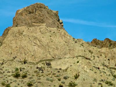 Granitic to volcanic transtion