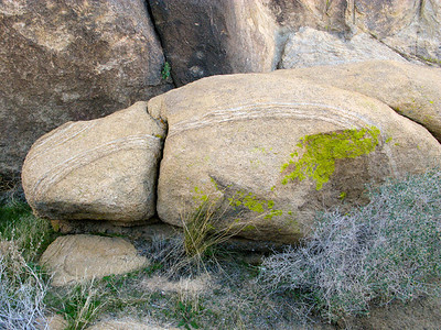Lichen at Painted Rock