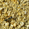 Ant on rock mound