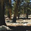 PCT Dark Forest