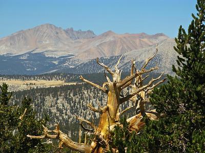 Johnson Peak