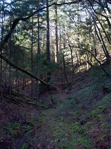 Mule Mountain Upper Applegate Valley Oregon
