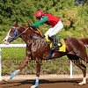 Horse Racing Jebel Ali, Dubai 14th November 2014