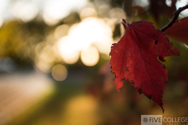 Autumn Aflame