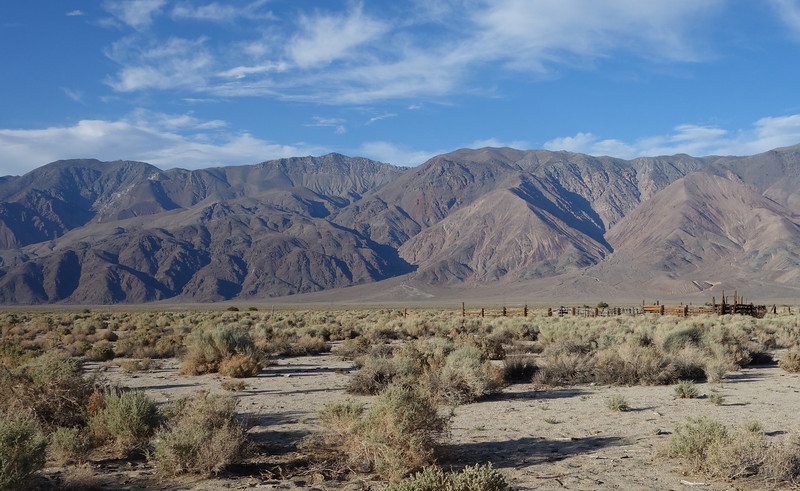 The White Mts seen from the desert floor. The Sierras are directly behind me.