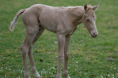 20140421 Baby Horse