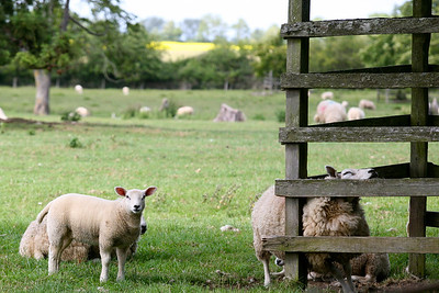 Curiosity and contentment in The Cotswolds