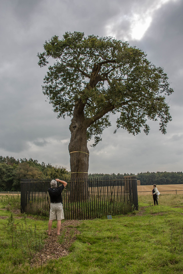 Boscobel tree-0587