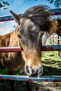 Horses158