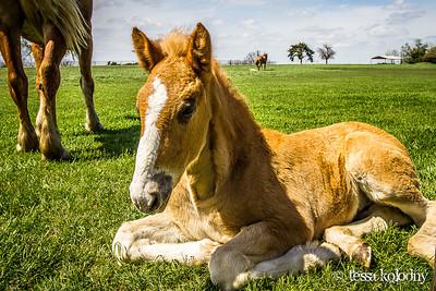 Horses146