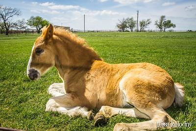 Horses149