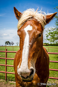 Horses165
