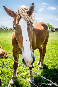 Horses151