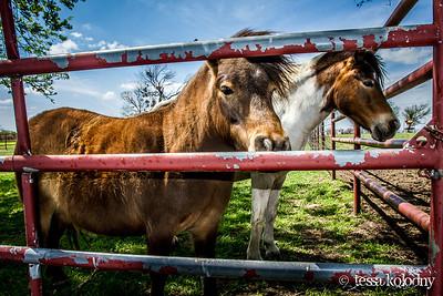 Horses154