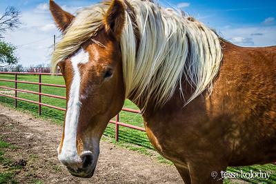 Horses159