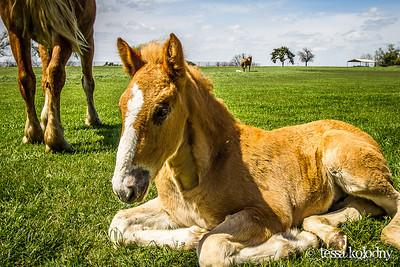 Horses145