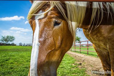 Horses162