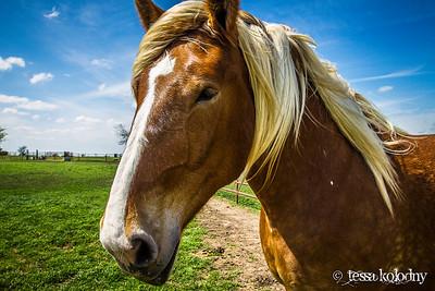 Horses160