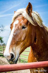 Horses164