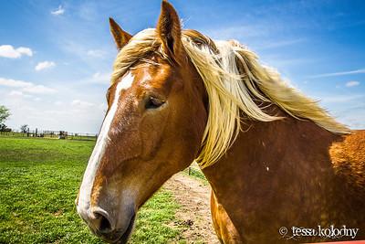 Horses161