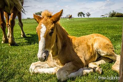 Horses147