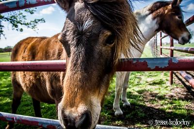 Horses155