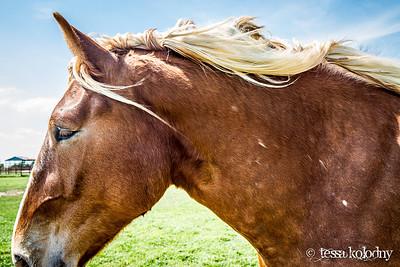 Horses163