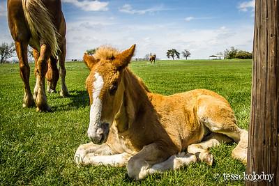 Horses148