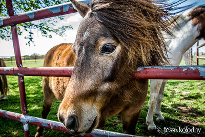 Horses156
