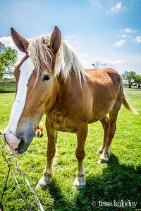 Horses152