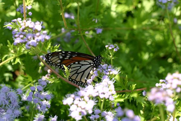 2014 Butterflies