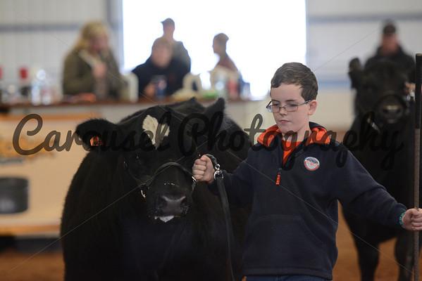 ESBC-2014-Steers