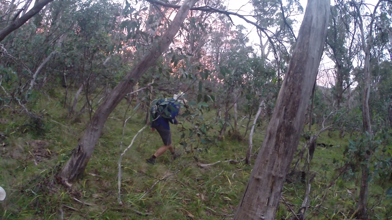 Through the bush - over the fallen timber! Looking for Checkpoint 96 near nightfall. <br /> <br /> Photo from Laure Gauthiez Putallaz.