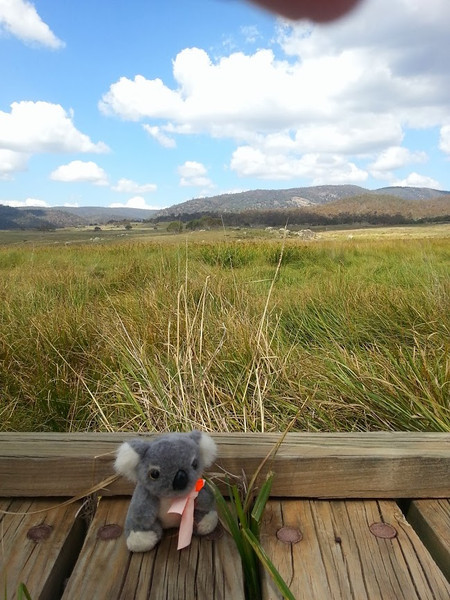 Barkley out on the Paddy Pallin 6hr course. <br /> <br /> (Photo: Geoff Dibley)