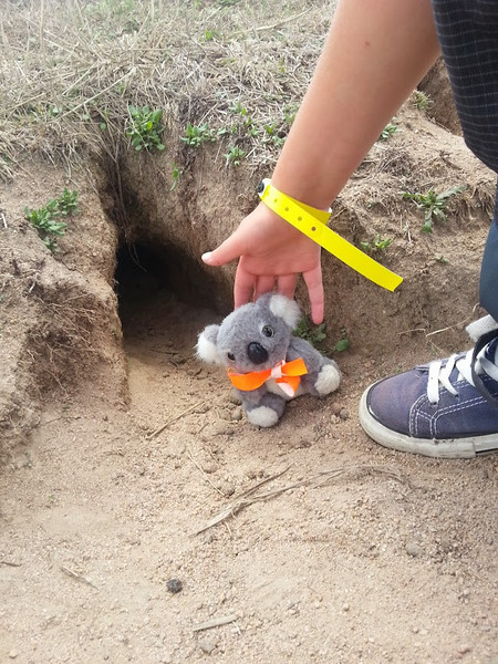 Another hole for Barkley to explore! <br /> <br /> (Photo: Geoff Dibley)