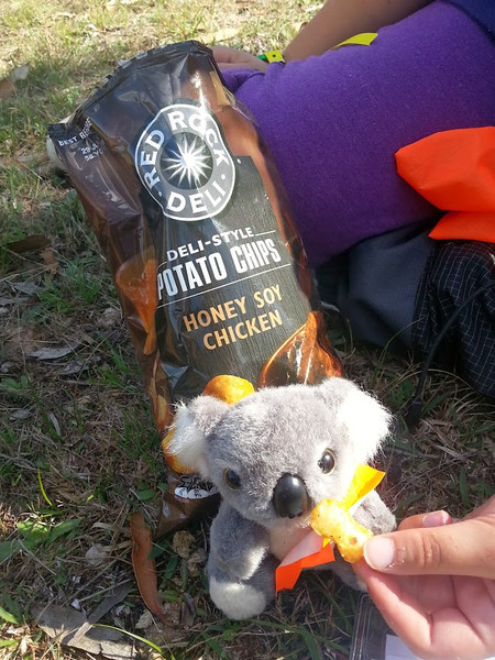 A snack to see him through the next leg - Barkley enjoying his rogaine. <br /> <br /> (Photo: Geoff Dibley)