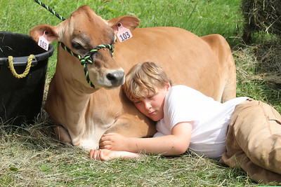 IMG_1776 JPG alex gray,10, of hartland and his cow Opal during a break