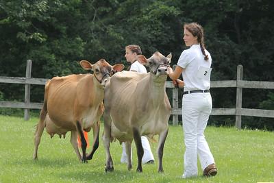 IMG_1747 JPG gretta stack and jenna rice of hartland show cows