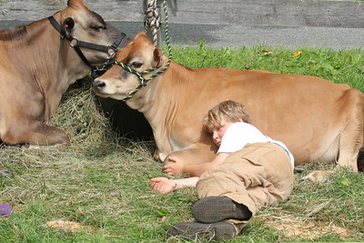 IMG_1770 JPG alex gray,10, of hartland and his cow opal