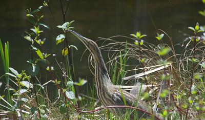 Young bird enjoying Springtime in Vermont