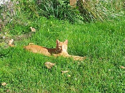 Ashli Girit - Rusty in grass