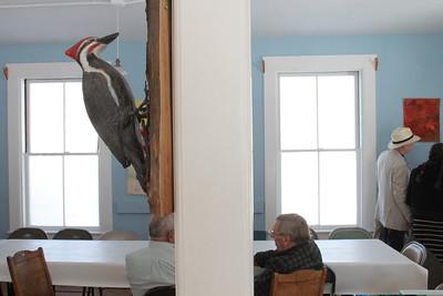 IMG_4353 JPG pileated woodpecker by peter wynia