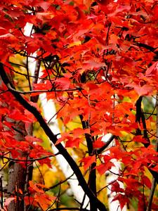 John Ketola Foliage 2014 04