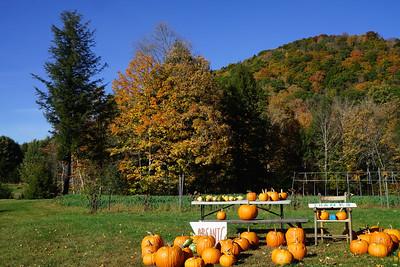 Carolyn Braznell Pumpkin Farm on Rt 12