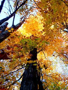 John Ketola Autumn Looking Up