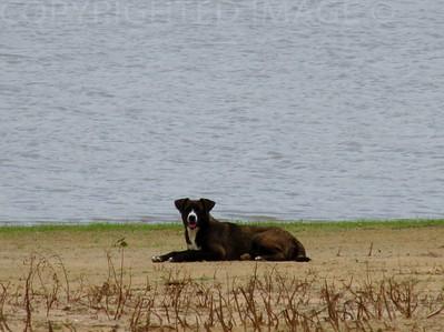 Lake Side Doggie