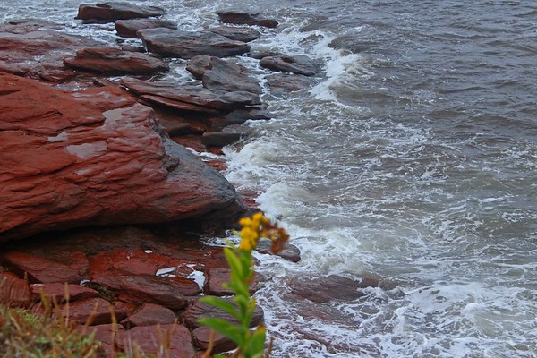 Red Rocks of Prince Edward Shore