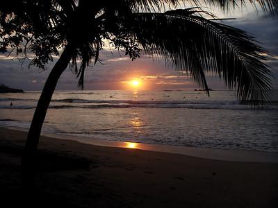 Mammino - Tropical Sunset